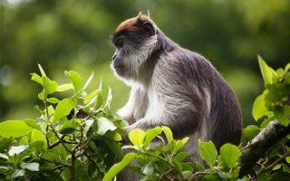 12 days Uganda wilderness tour