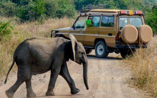 15 days Best of Uganda vacation