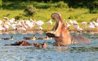 3 days Lake Naivasha and Lake Nakuru Safari