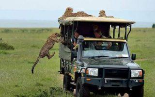 4 days Amboseli and Naivasha safari