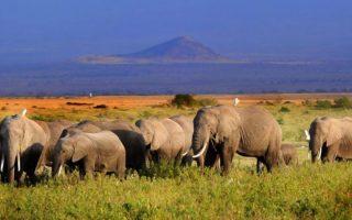 6 days Amboseli and Mara safari