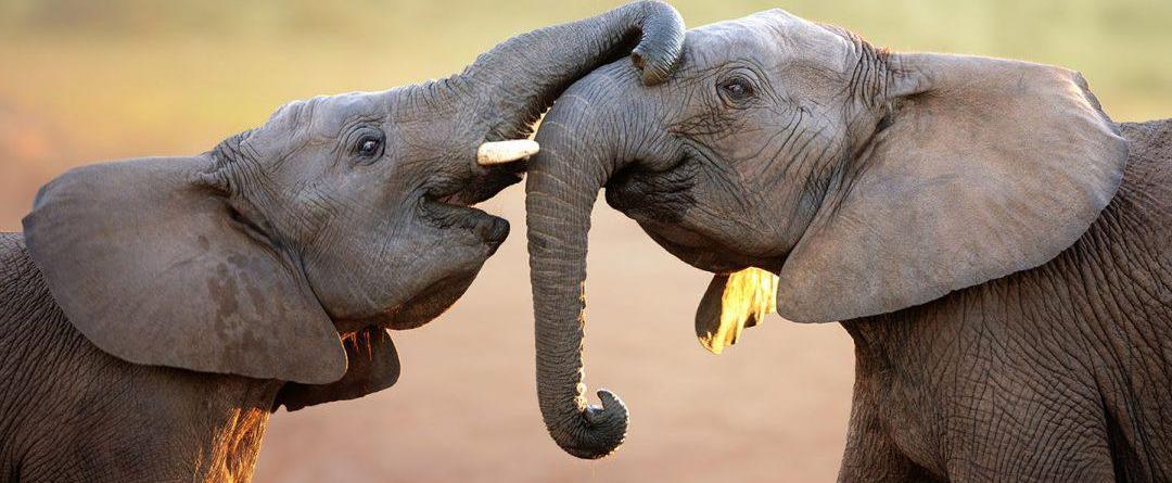 7 Days Explore Kenya safari