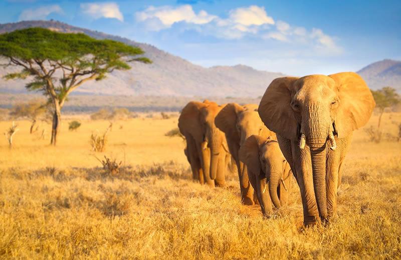 Tsavo East National Park fees