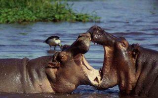 3 Days Lake Manyara Safari