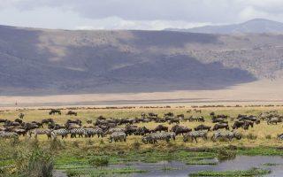 3 Days Wildlife Tanzania adventure safari (Ngorongoro crater and Lake Manyara national park)