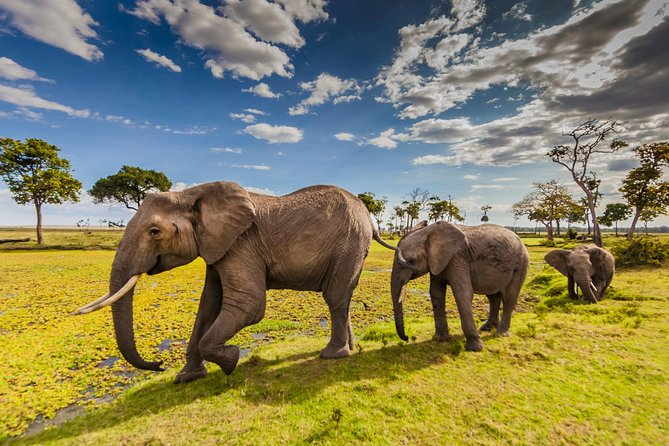 5 Days Amboseli & Tsavo West Safari