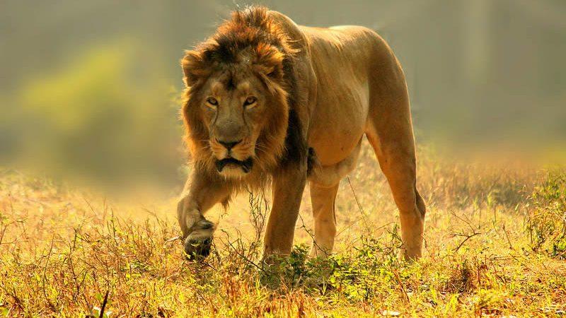 7 days big five Kenya safari