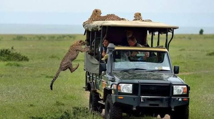 Game Drives in Masai Mara National Reserve