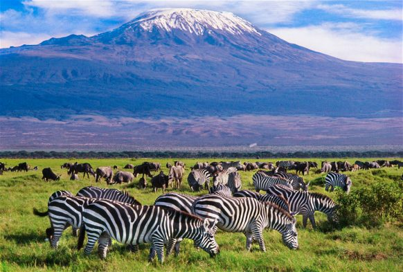 4 Days Amboseli Wildlife safari