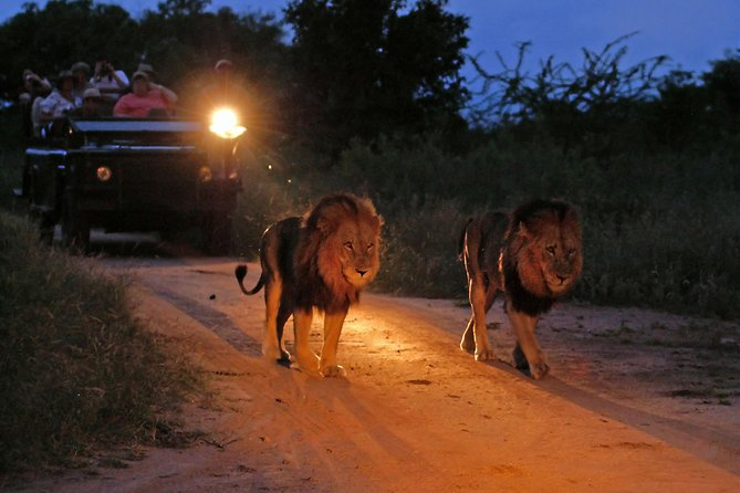 Night game drives looking for Lions