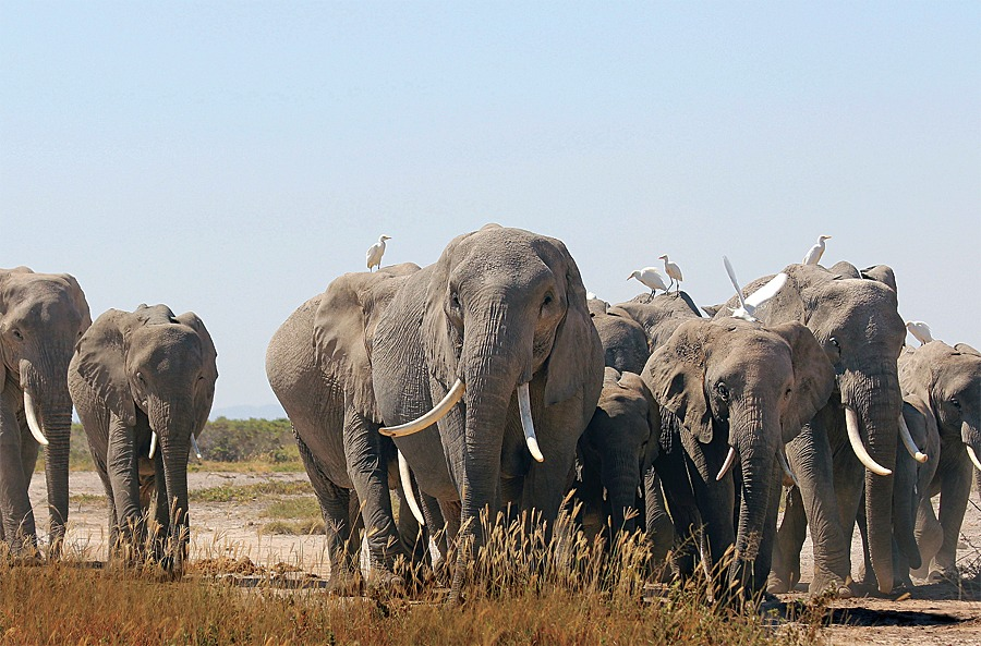Elephant Research Camp in Amboseli national park