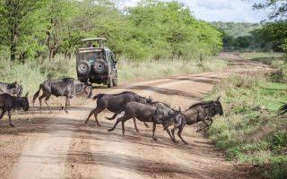 4 Days Tanzania Budget Camping safari