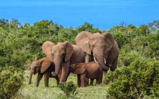 2 Days Aberdare National Park safari