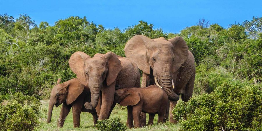 4 Days Samburu, Ol Pejeta & Aberdare safari
