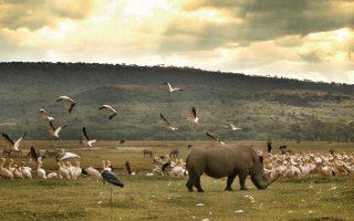 2 Days Lake Nakuru Wildlife Safari