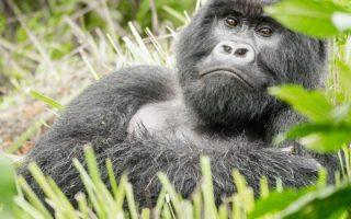6 Days Rwanda Gorillas & Kenya Wildlife Safari