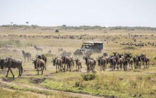 4 Days Lake Nakuru & Masai Mara Wildlife Safari