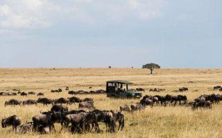 Safari Activities in Maasai Mara National Reserve