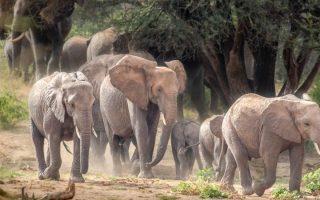 Samburu National Reserve entry fees 2021