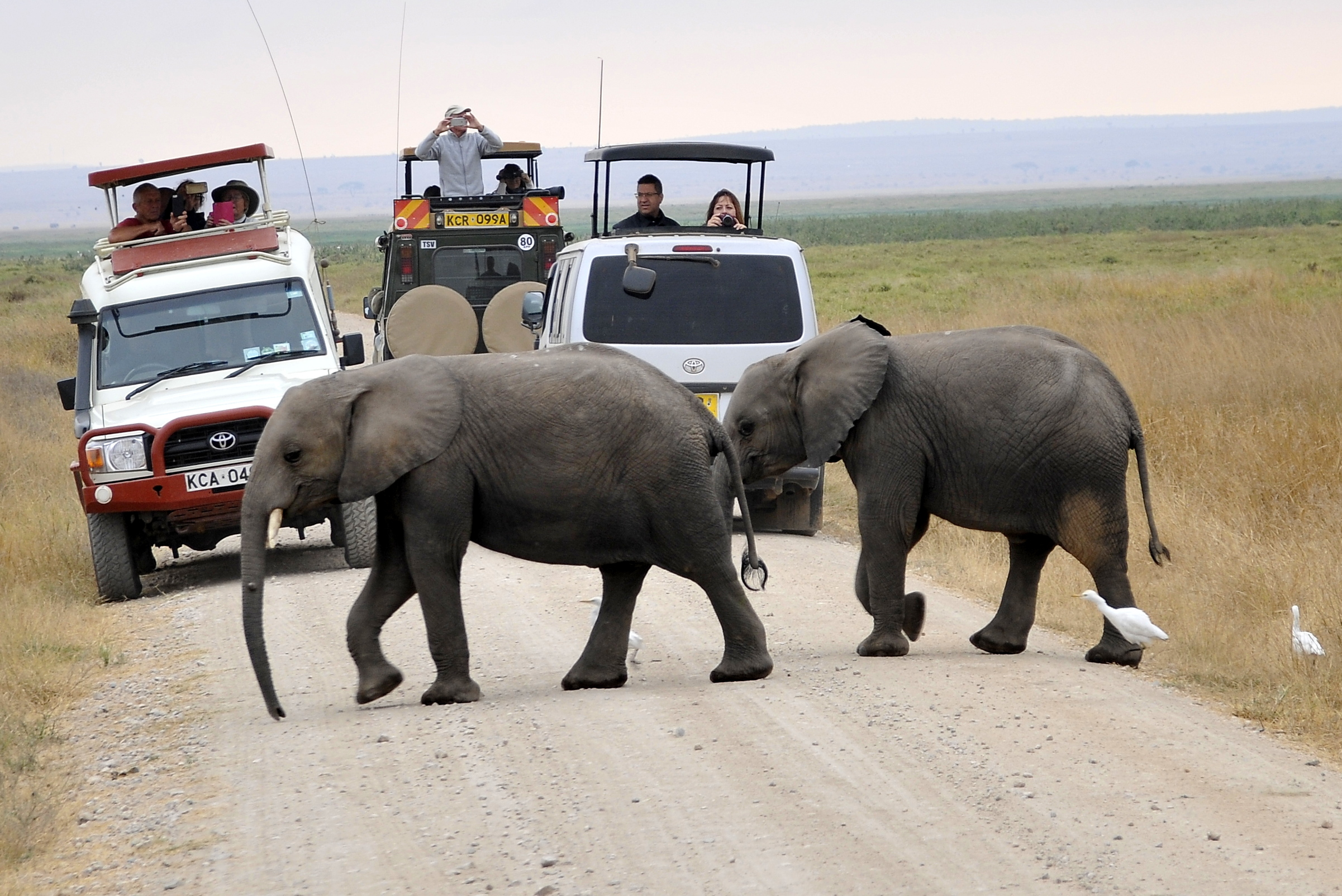 Gmae drives in Amboseli national park