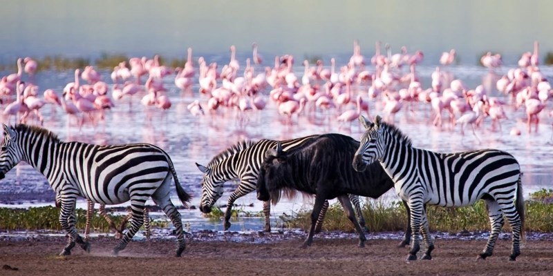 Lake Nakuru National Park.