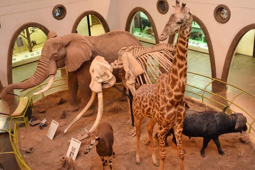 Nairobi Museum